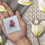 All Natural Glycerin Soap including bird photography by Celina del Castillo - The Red Cardinal